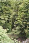 Beechforest Mt. Owen