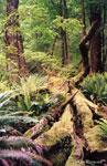 [ Te Anau Forest 1 ]