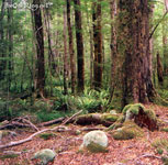 [ Te Anau Forest 2 ]
