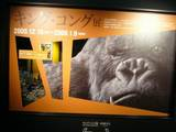 The Japanese King Kong Exhibition